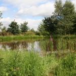 Wildlife pond after 3 months