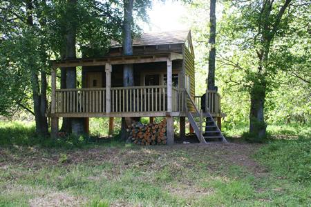 David's Tree House