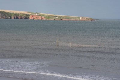 Pullar nets in Lunan Bay