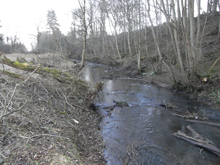 Lemno Burn after the tree canopy was reduced