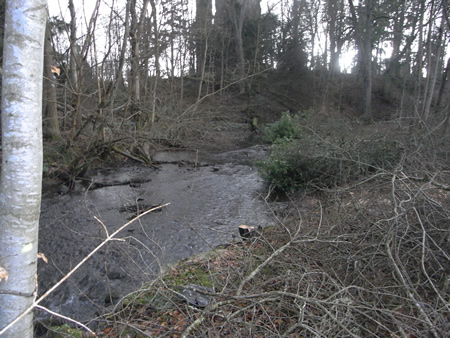 An overgrown and overshaded Lemno Burn