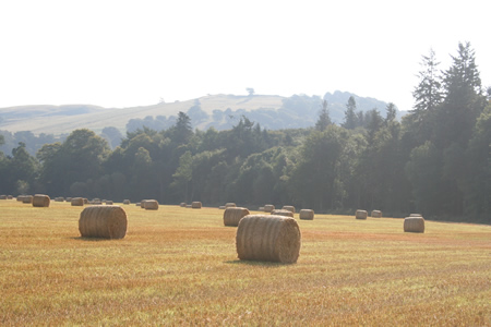 Lemno Woods & high-roll bales