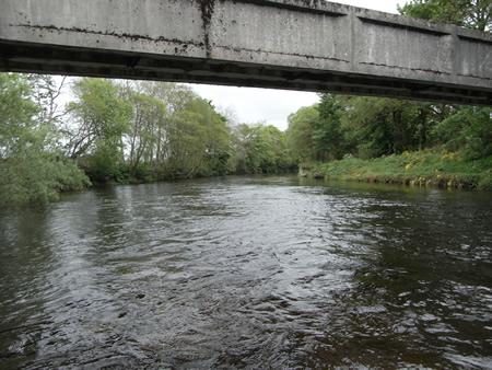 The salmon Lie below the Haughs Aqueduct