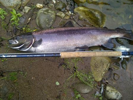 Philip's 20lbs salmon